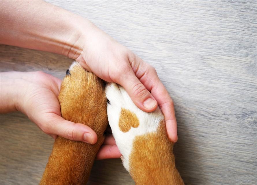 人間の手に抱えられた犬の前足