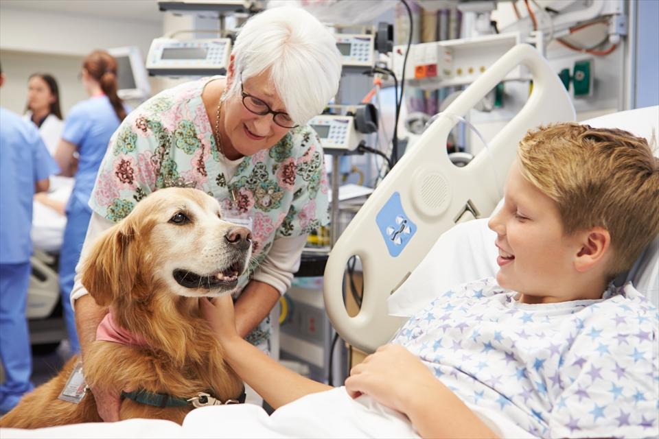 入院中の少年にアニマルセラピーを行う犬
