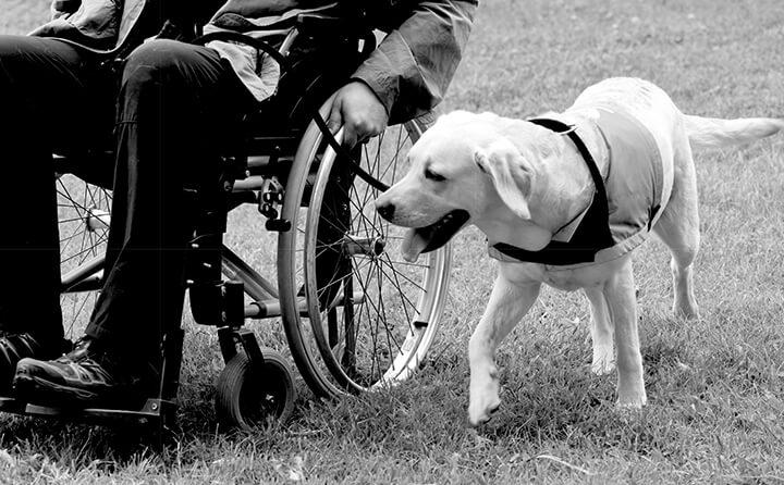 車いすに乗った人と犬
