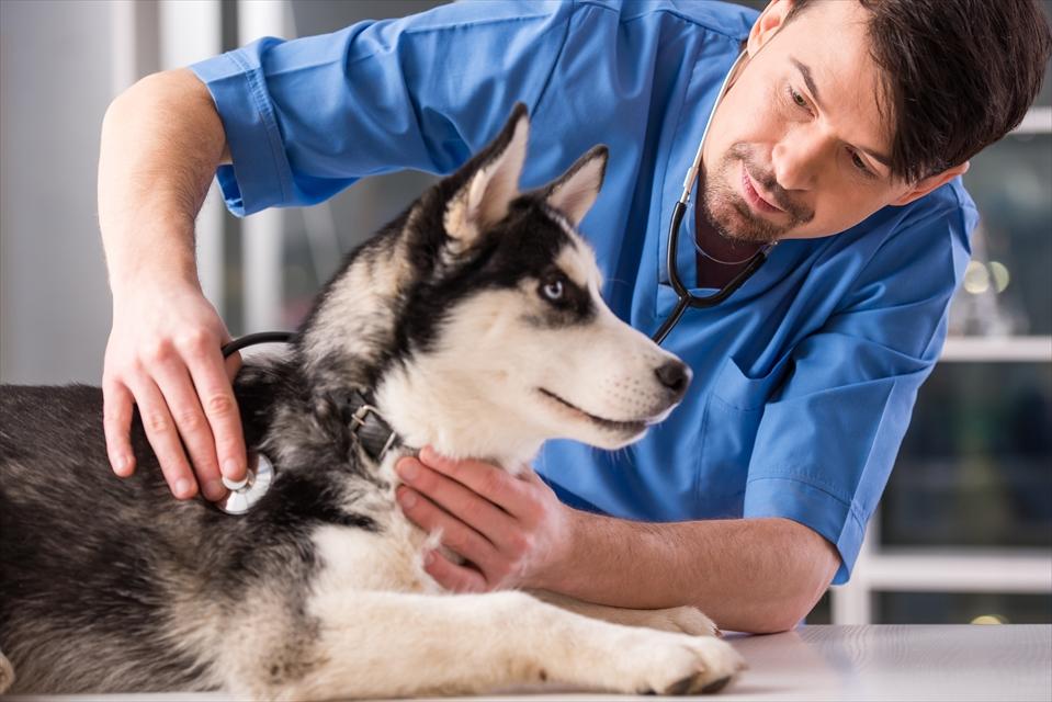 喉を診られている犬