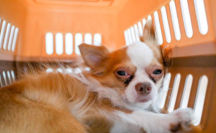 ケージに入れられた犬