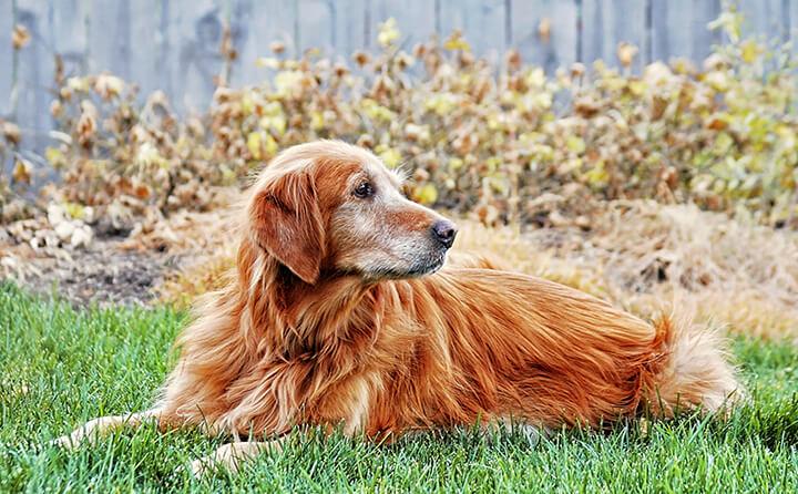 一点を見つめる犬