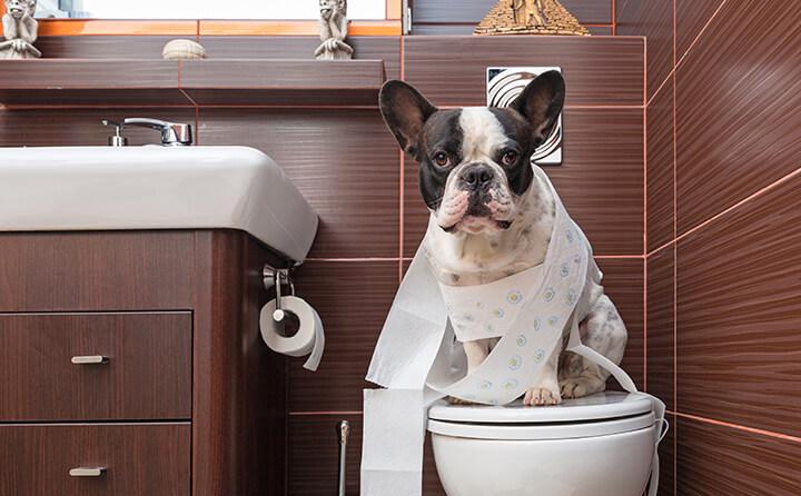 トイレットペーパーを巻き付けた犬