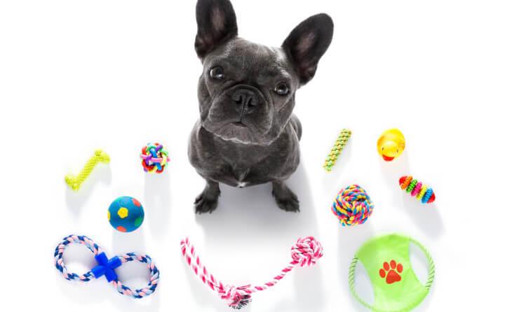 おもちゃと犬
