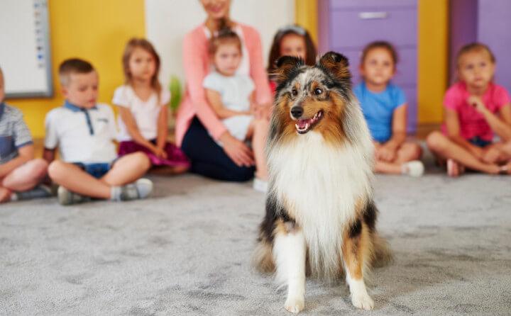 学校での動物介在教育