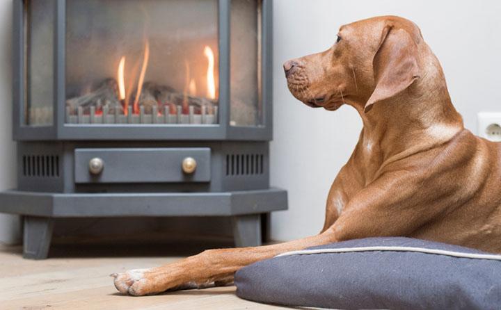 暖炉の前に座る犬