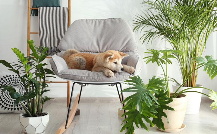 ソファに座り込む犬