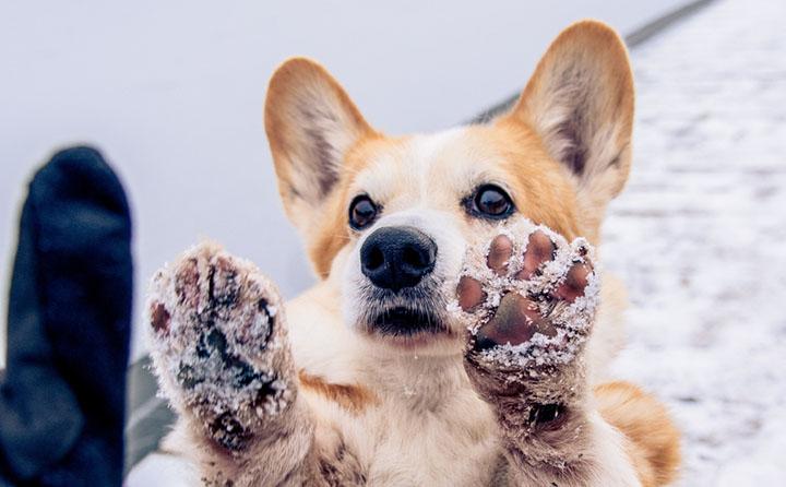 寒い場所にいる犬