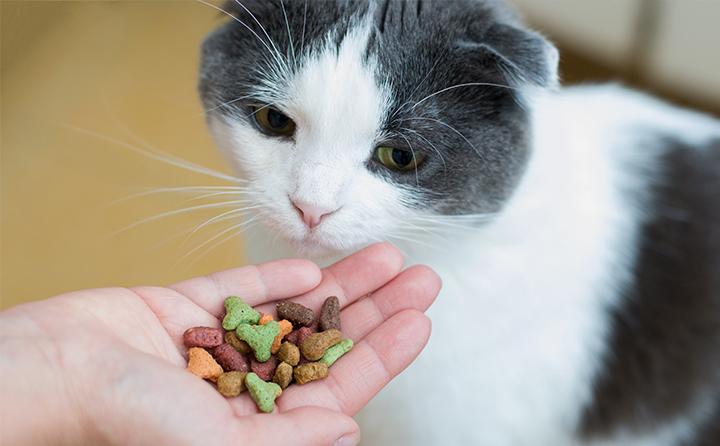 猫におやつをあげていいのはどんなとき?