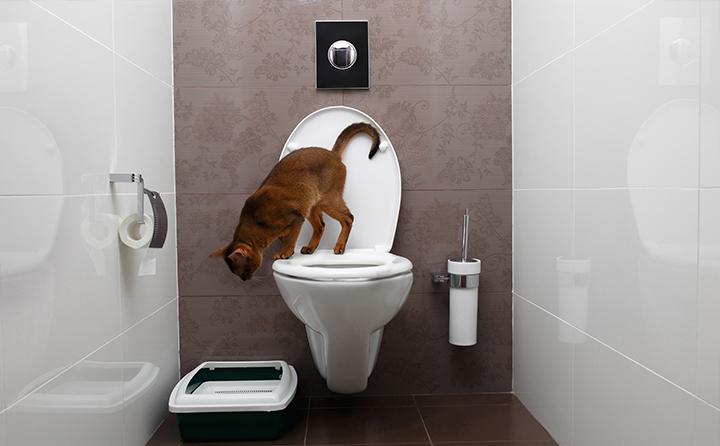 成猫がトイレに失敗する理由